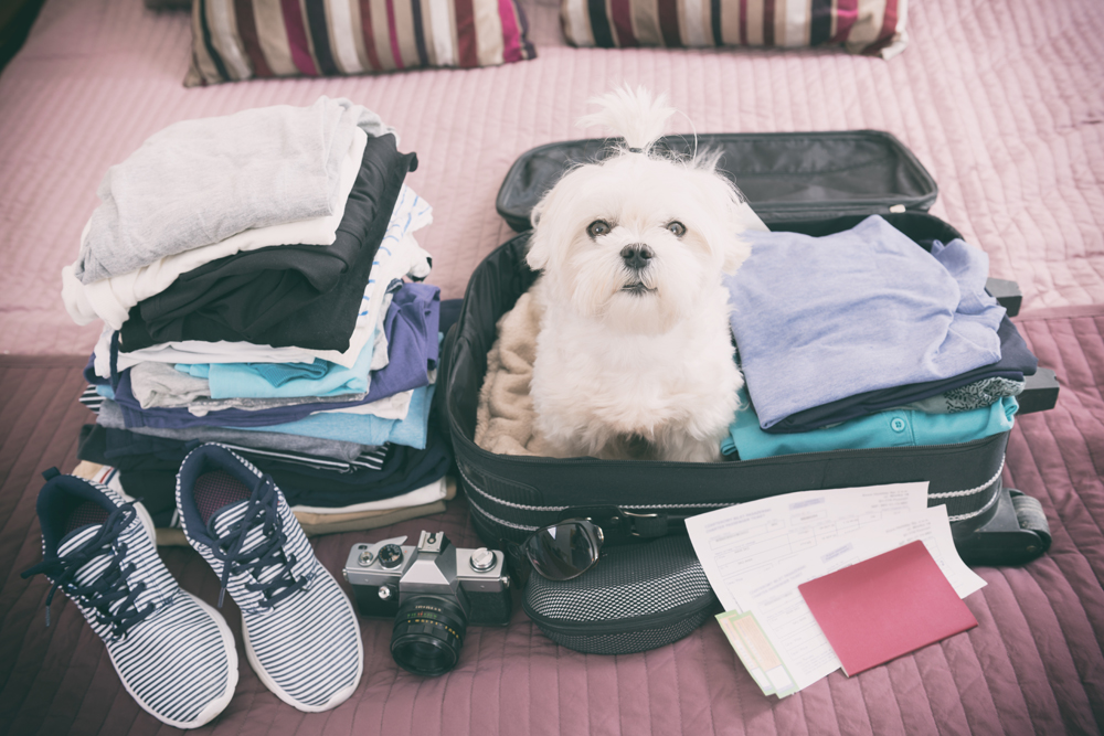 Dog ready to go travel