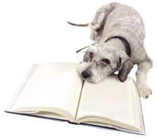 dog reading a book